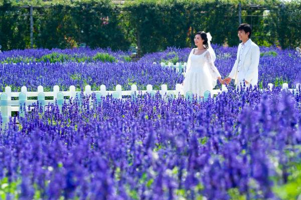 广州婚纱摄影景点攻略:百万葵园