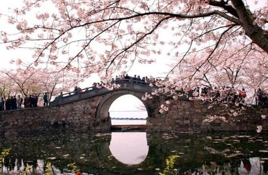 春季蜜月旅行的结婚攻略 日本看樱花全攻略