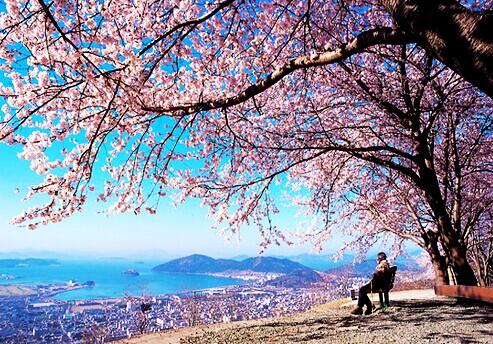 蜜月旅行去济州岛!带上婚纱去旅行
