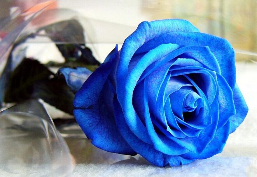求婚鲜花的颜色 求婚玫瑰花用多少朵比较好?
