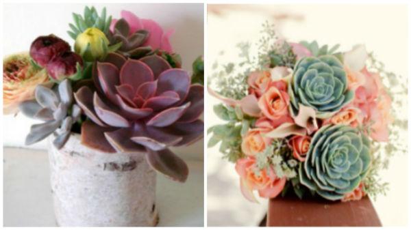 婚礼花束的新宠——石莲花